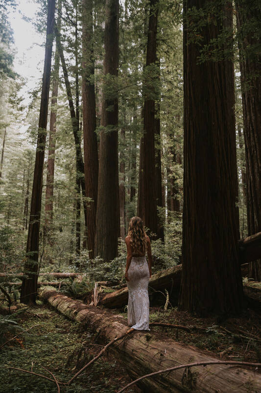 bridal photos in the redwoods