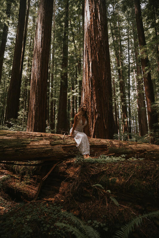 forest elopement packages in california